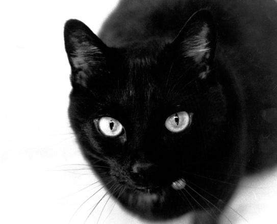 dzieciakizwierzaki-czarnykot